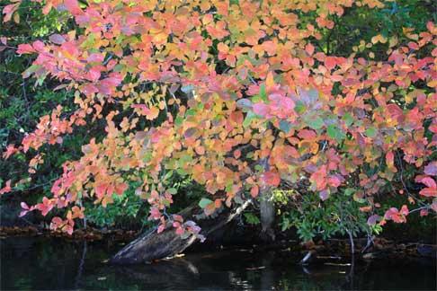 Lynne Robinson, Hewitt, New Jersey