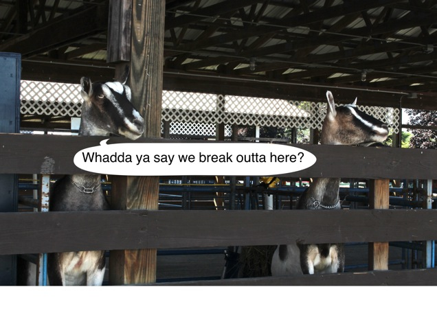 Goatstalk