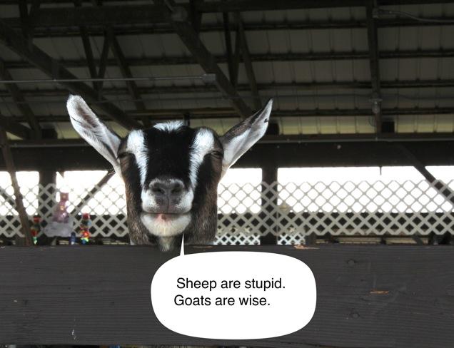 Goattalk2